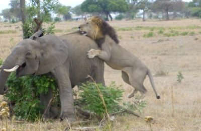 luxury selous safari and zanzibar town