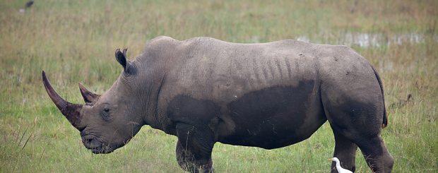 short tanzania camping safaris