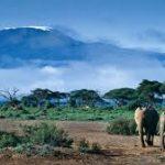 Mt Kilimanjaro Tanzania-Safari
