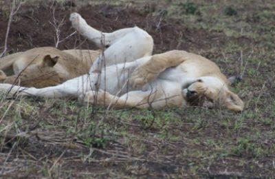 5 Days Serengeti Ngorongoro & Lake Natron