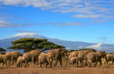 Kilimanjaro safari & Zanzibar beach