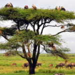 Family Safari Special Zanzibar