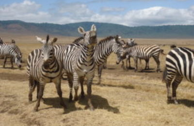 Safari Tanzania & Zanzibar Beach Itinerary