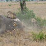 Southern Tanzania safaris & Zanzibar