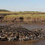 Serengeti National Park & Wildebeest Migration safari