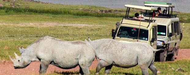 2 days Tanzania Lodge Safari Ngorongoro Crater & Tarangire Packadge