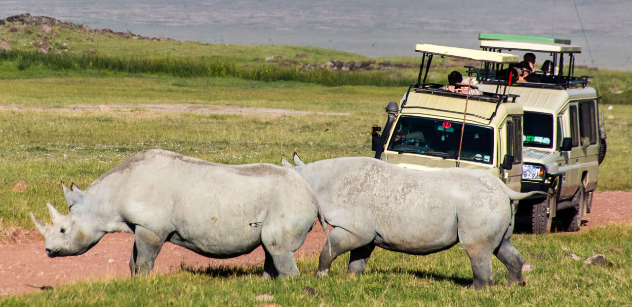 Our Ngorongoro crater safari
