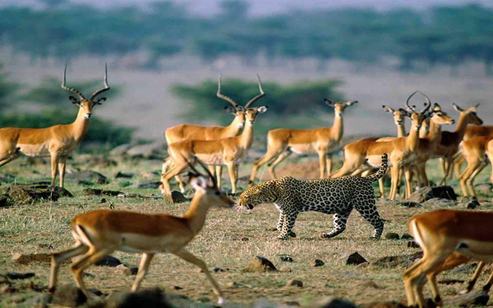 Tanzania Safari Holidays & Packages Zanzibar