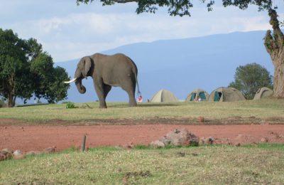 Camping Safari Ol Doinyo Lengai Trek
