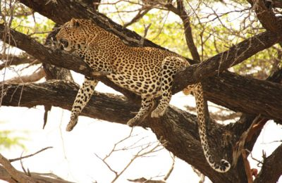 Tanzania Budget Lodge Safari Package