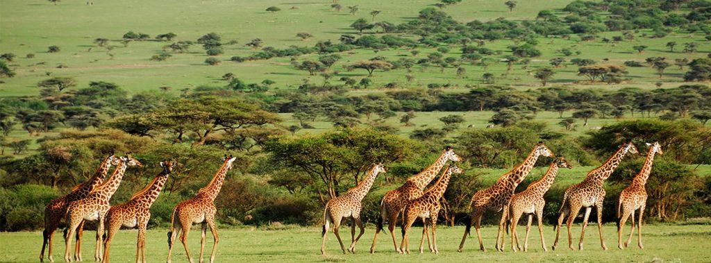 Mikumi National Park Southern Tanzania