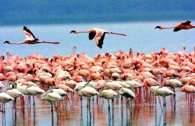 4 Days Tanzania Lodge Safari Package