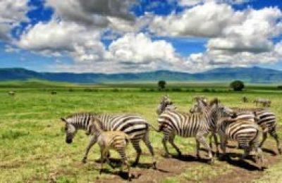 3 Days Tanzania Lodge Safari Package