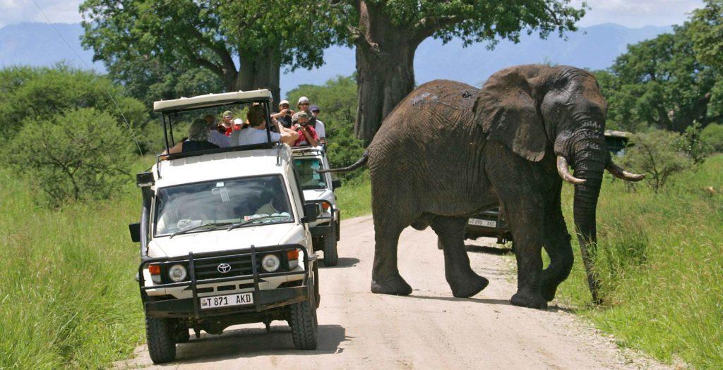 Tarangire National Park Day Trips Tours