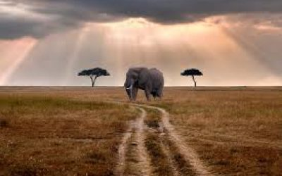 How Much Does A Tanzania Safari Cost?