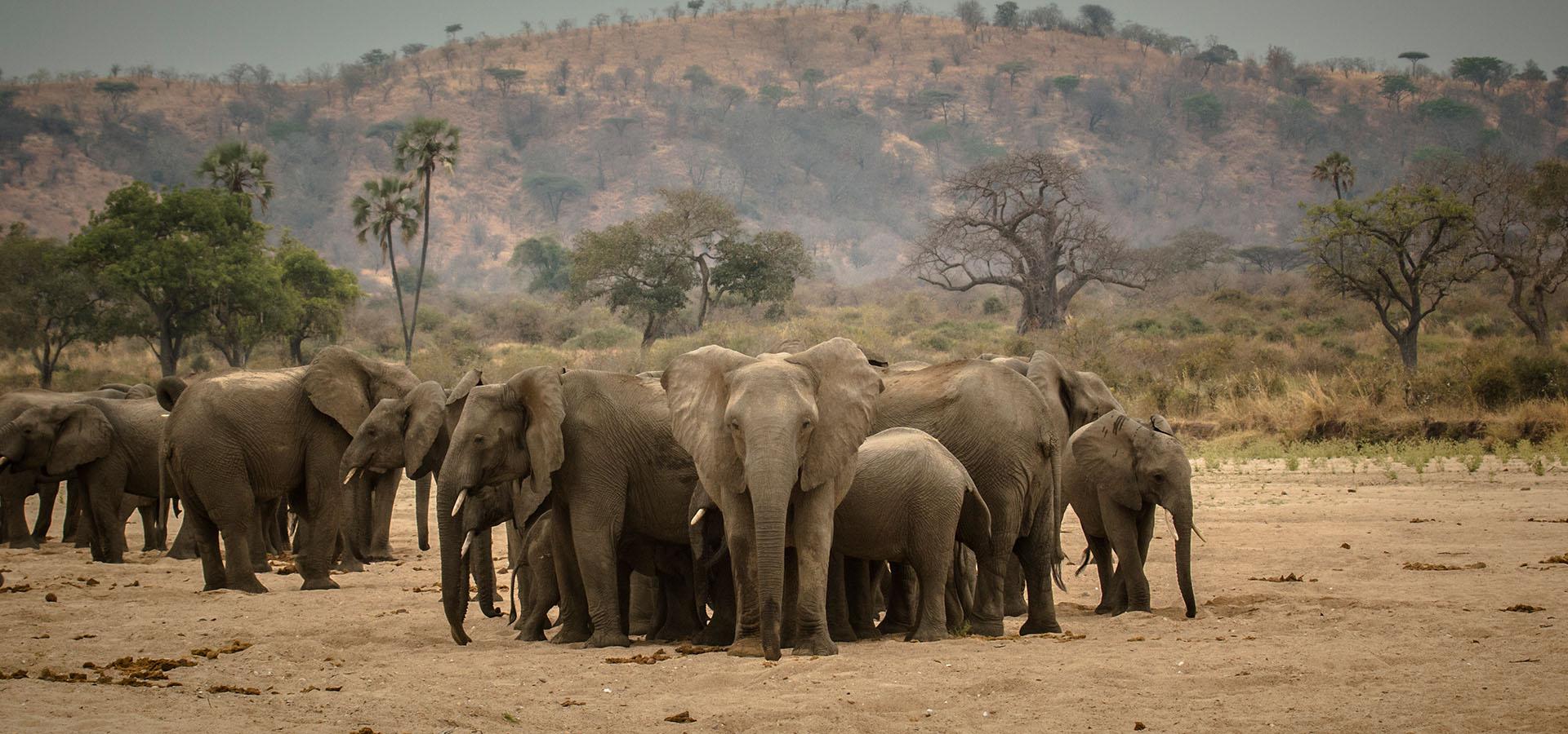 Ruaha National Park Southern Tanzania