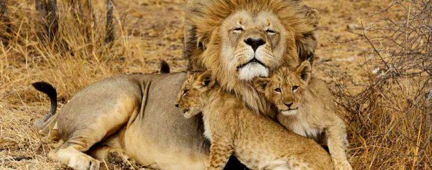 5 Days Tanzania Camping Safari Package